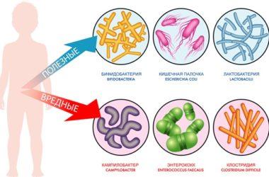 полезные и вредные бактерии